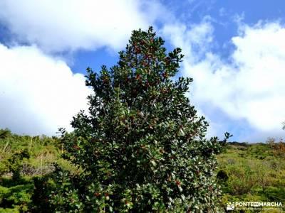 Dehesa Bonita-Abedular Somosierra;excursiones en andorra parque natural rio lobos sierra de tejeda a